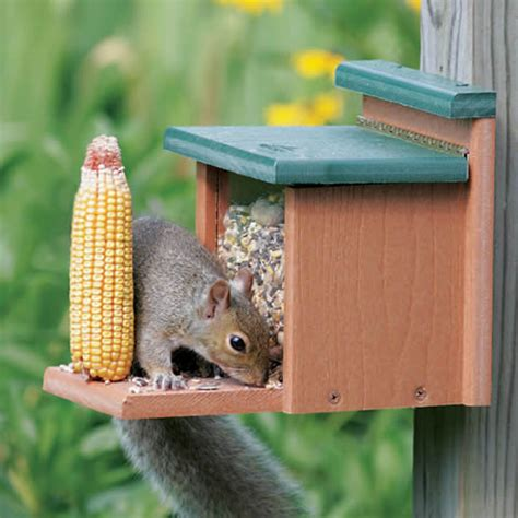 duncraft com duncraft 2929 recycled squirrel munch box