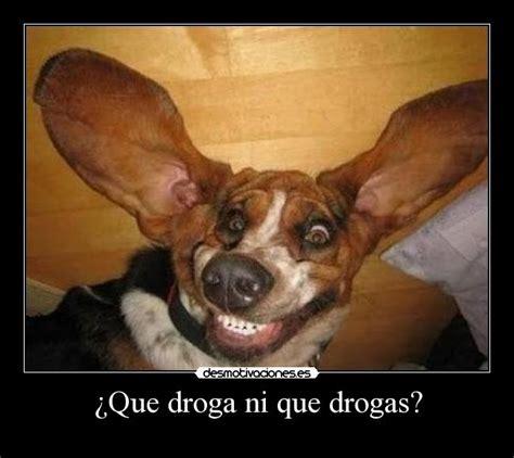 imagenes graciosas sobre drogas 191 que droga ni que drogas desmotivaciones