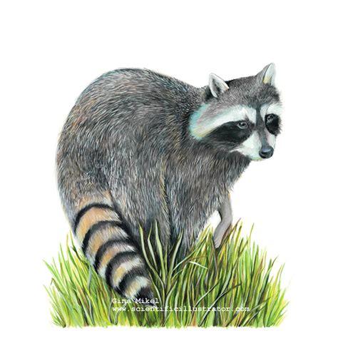 How Do You Become A Realtor raccoons invading attics atlanta pest control