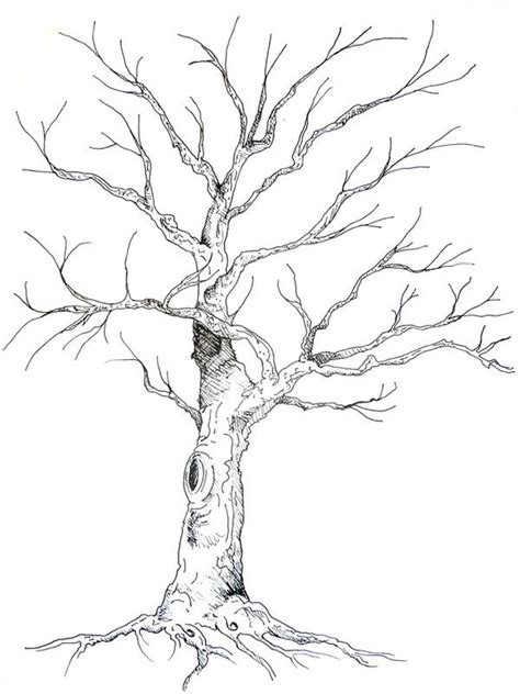 drawings of trees best 25 tree illustration ideas on trees