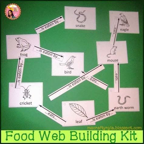 food web maker food chains food webs and science on
