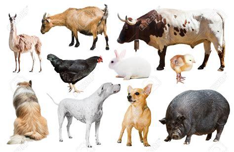 imagenes animales de granja ejemplos de animales de granja