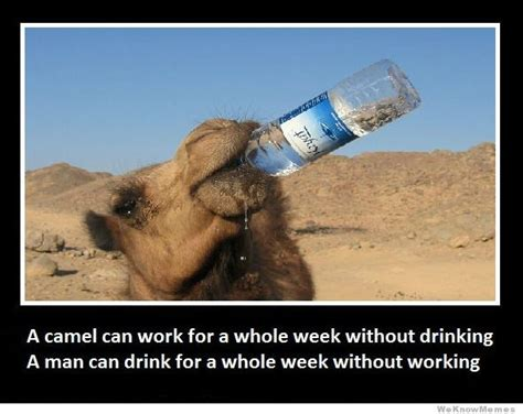 Camel Memes - a camel can work for a whole week without drinking