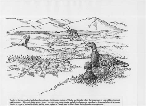 Tundra Coloring Pages tundra coloring pages printable coloring pages