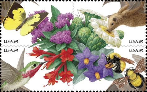 A Hint Of Purple Vol 3 a great day for pollinators at risk the plant press