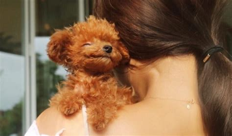 Shoo K9 Teddy Dogs 710ml this tiny pup is like a real teddy iheartdogs