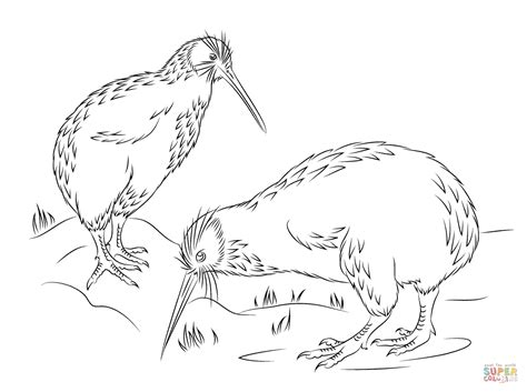 coloring page kiwi bird little spotted kiwi coloring page free printable