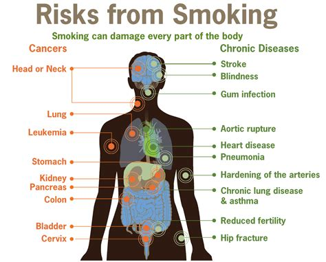 quit smoking benefits men how to small penis health effects of tobacco wikipedia