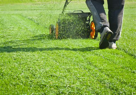 Course On Lawns What You Should by 5 Basic Lawn Maintenance Tips Everyone Should