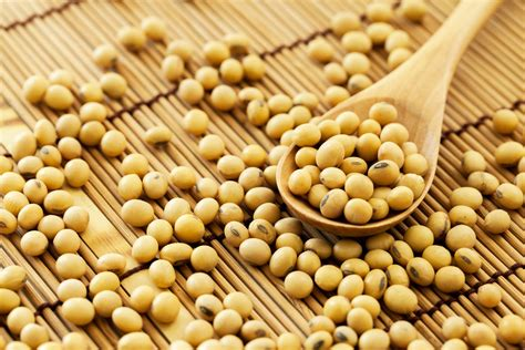 Soya Bean 1 rains influence on us soybean sowing and wheat harvest