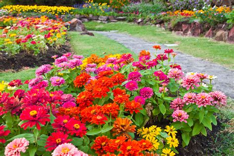 zinnias flower garden tips and ideas for a great summer garden stoney creek