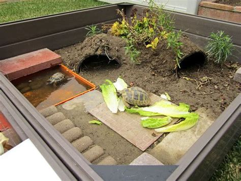 backyard turtle habitat outdoor turtle habitat for my babies
