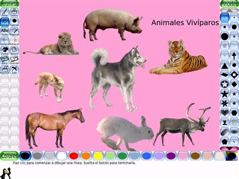 imagenes animales oviparos y viviparos escuela municipal n 186 7423 quot santa teresita quot galer 237 a de