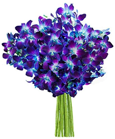 Flowers Without Vase by Blue Orchid Fresh Flower Bouquet 20 Stems Without Vase Flowersnhoney Fresh Flowers And