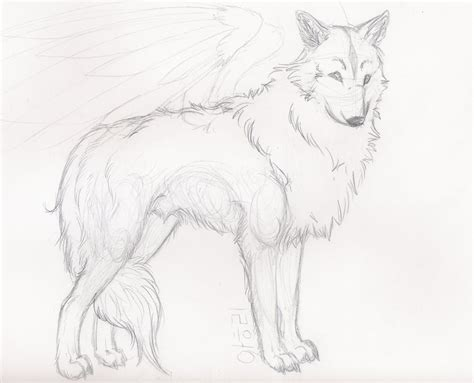 Sketches Wolf by Wolf Sketch By Starlietwolf On Deviantart
