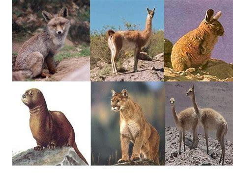 imagenes animales acuaticos y terrestres conociendochile