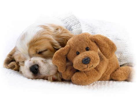 do puppies sleep through the your puppy s home designer info