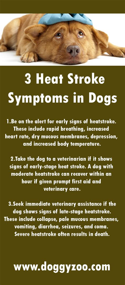 symptoms in dogs 3 heat stroke symptoms in dogs doggyzoo comdoggyzoo