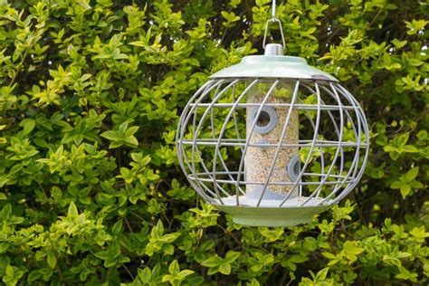 best squirrel proof bird feeders 2018 baffles caged