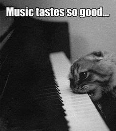 Cat Playing Piano Meme - cats with pianos on pinterest piano stevie wonder and