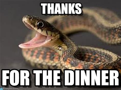 Snake Meme - 17 funny snake images and pictures