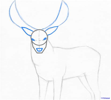 one t draw step 3 how to draw a stag deer stag
