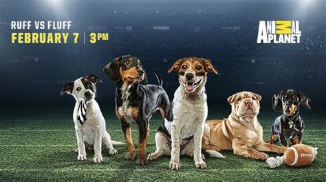 2017 puppy bowl lineup puppy bowl xiv starting lineup