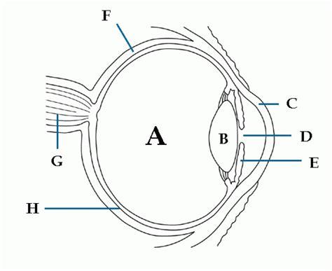 diagram mata unlabeled eye diagram anatomy organ