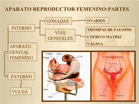 vestibulo anatomia femenina anatom 237 a y fisiolog 237 a del aparato reproductor femenino