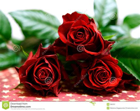 photo collection dark red roses