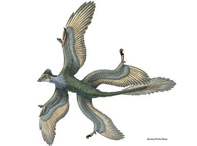 lucertole volanti flying dinosaur may resembled biplane toronto