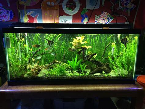 how to aquascape a freshwater aquarium 5 aquarium plants for beginners jungle val dwarf lily bacopa amazon fish