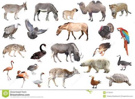 Animals Collection animal collection isolated in white stock image image