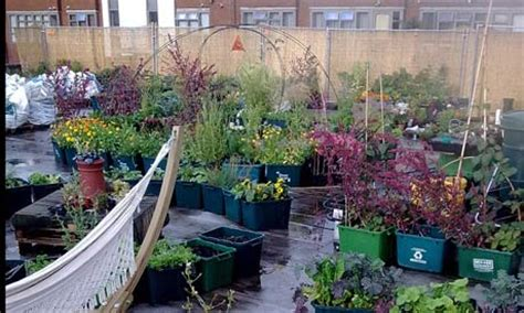 Rooftop Vegetable Garden Ideas The Supermarket Growing Food On Its Roof Environment The Guardian