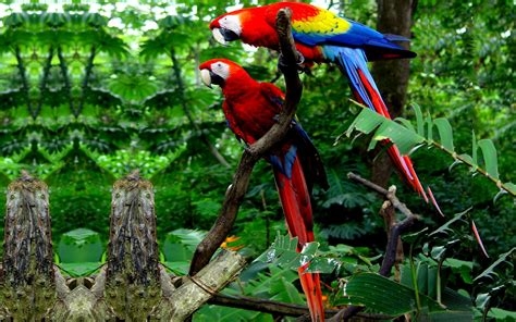 colorful macaw wallpaper colorful parrots hd wallpapers