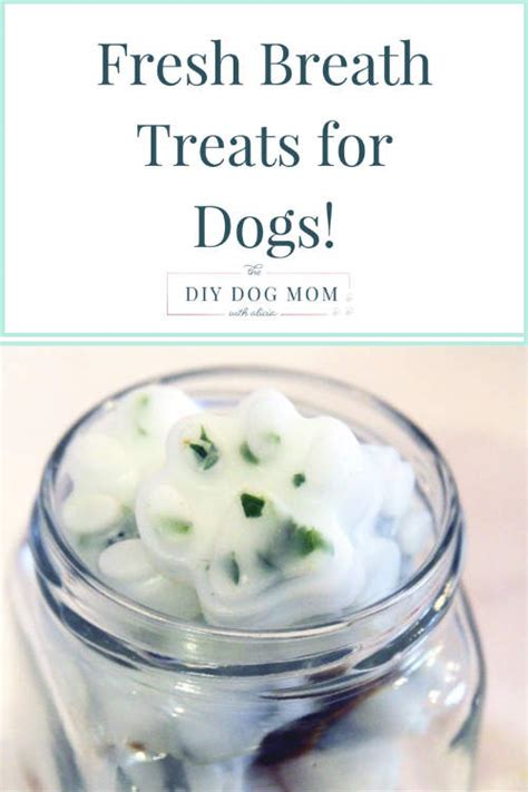 how to freshen dogs breath how to make fresh breath treats for dogs iseeidoimake