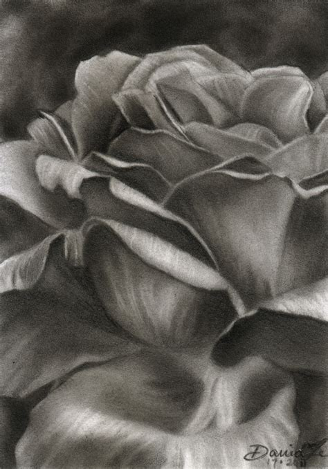 pencil sketch of rose flower archives pencil drawing