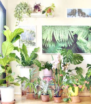 beautiful indoor plants 18 most beautiful indoor plants and 5 easy care tips a of rainbow