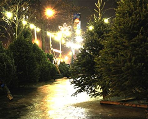 christmas tree farms in albany ny area the best place to get a fresh cut tree all albany