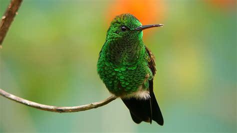 wallpaper green with birds hummingbird wallpaper 778167