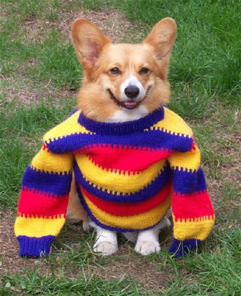 puppies in sweaters dogs in sweaters who can t even with winter