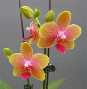 Orchids Orchidaceous Orchid Blog November 2010