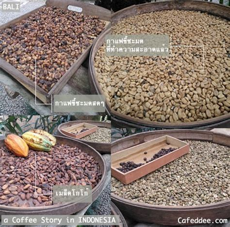 Coffee Bean Semarang 121 best images about kopi luwak coffee indonesia on