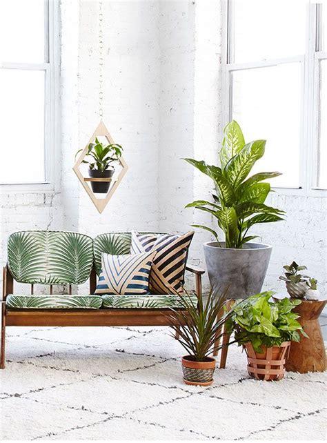 handig voor in huis handig je wordt minder snel ziek als je deze planten in