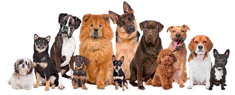 lade berger valg af hunderacer hundedamen