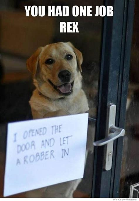 Dog Shaming Meme - you had one job rex meme collection