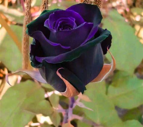 imagenes todo flores ஜ ஜ azulestrellla ஜ ஜ flores ex 243 ticas de todo el mundo