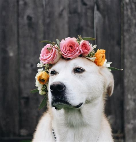 puppy flowers these flower crown wearing dogs are ready for festival season flower crowns