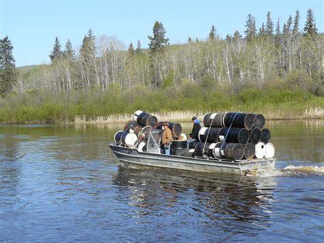 trophy boats alberta black bear hunting outfitters alberta canada guided black