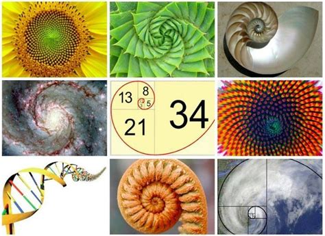 number pattern of nature 10 ideas about fibonacci in nature on pinterest